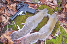 Pistol Squirrel Hunting