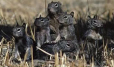 Squirrels Family